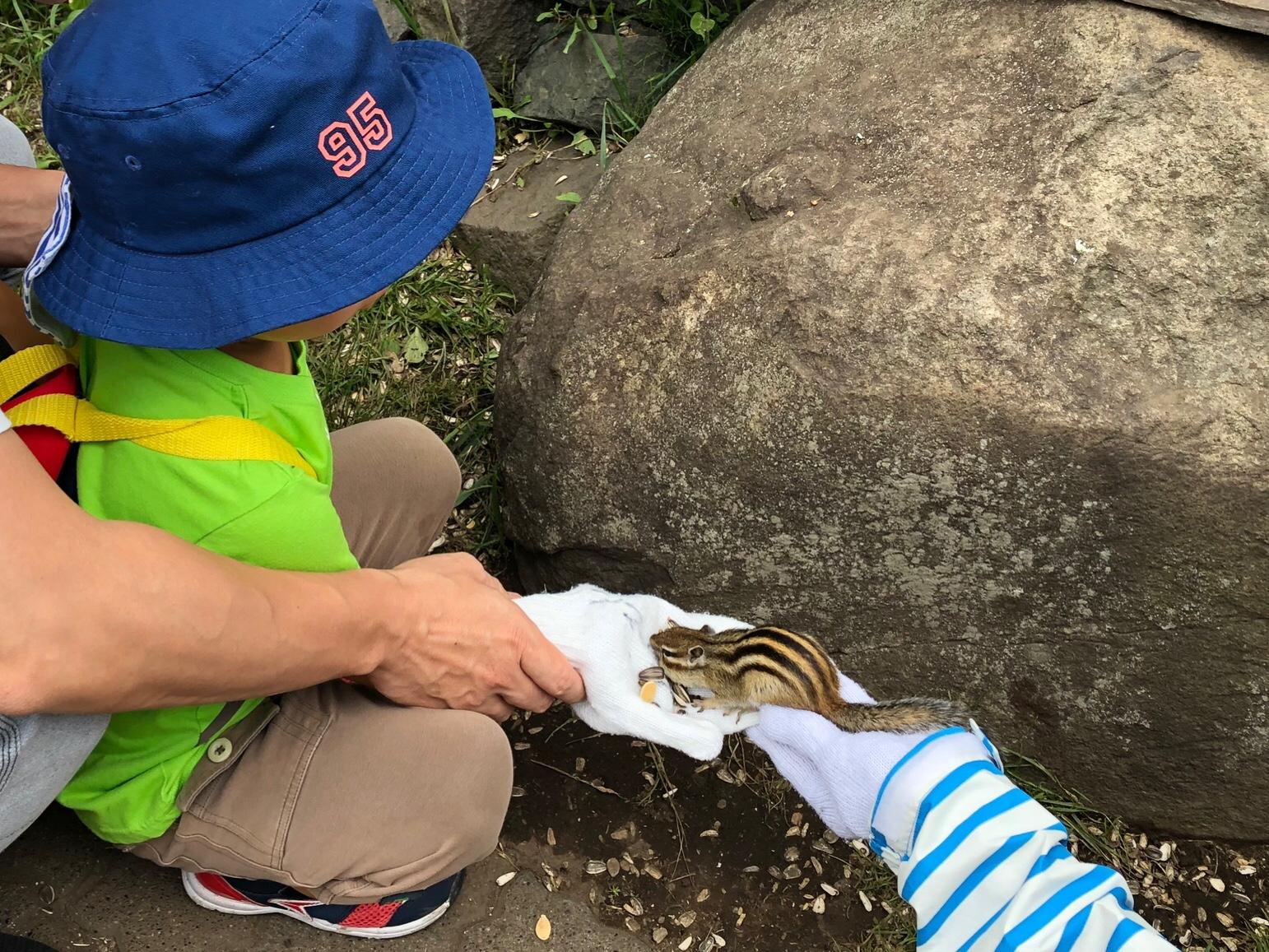 リスが手のひらの餌を食べてる